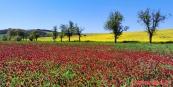 červená - žlutá - modrá :-)